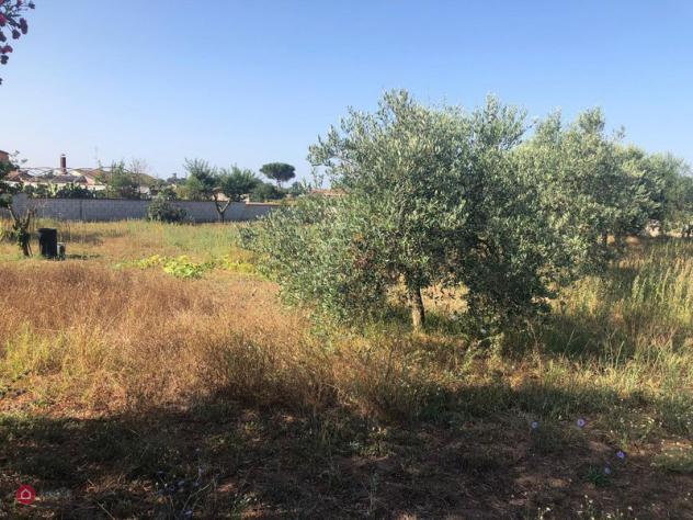 Terreno agricolo di 3500mq in via amilcare cipriani a anzio