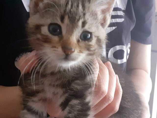 Gattina da adottare urgentemente
