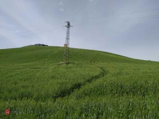 Terreno agricolo di 71175mq a ripatransone