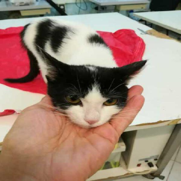 Gattina di 3 mesi e mezzo cerca casa