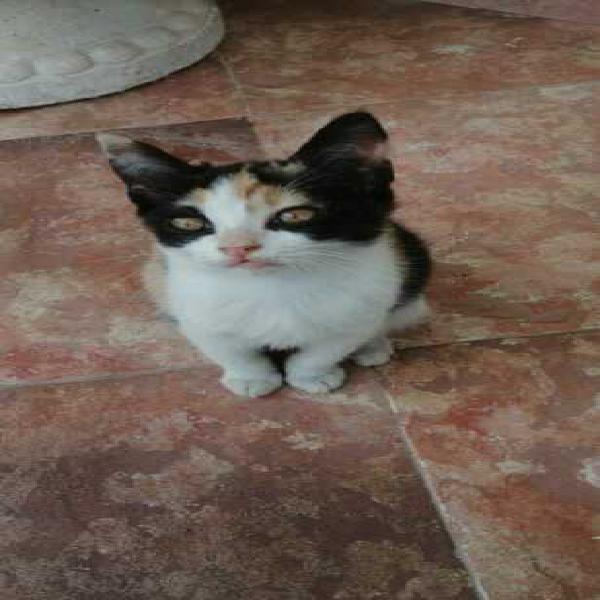 Regalo gattini dolcissimi