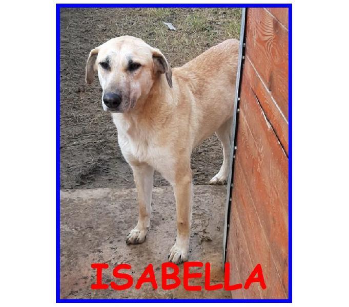 Isabella dagli occhi tristi...2anni dolcissima con tutti
