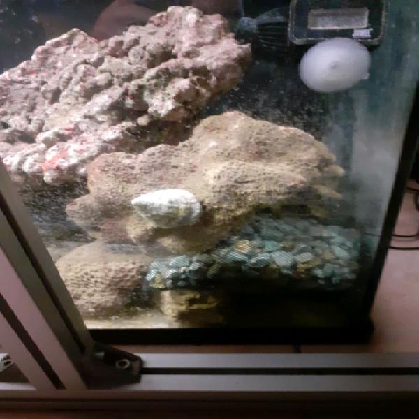Roccie vive per acquario marino