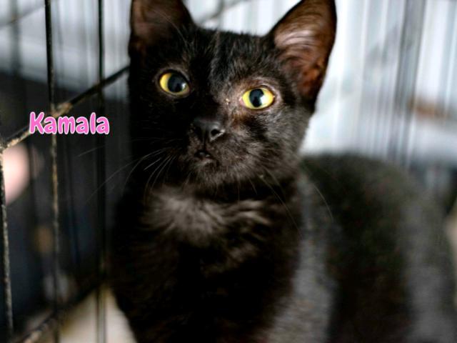 Kamala micetta nera di quattro mesi