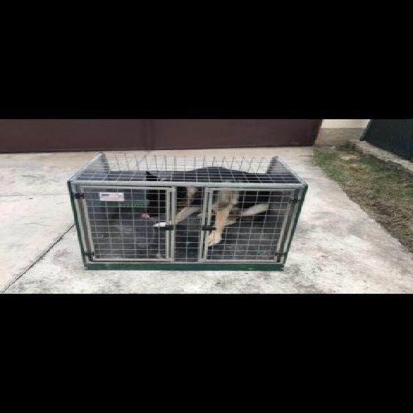 Gabbia trasportino per cani