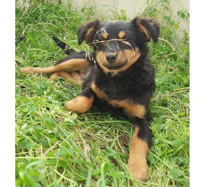 Nelly adorabile cucciolina in adozione