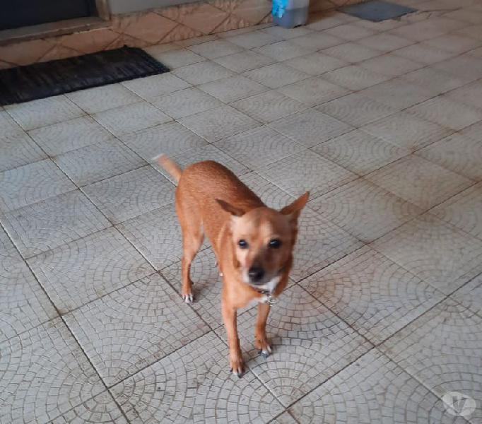 Marley: nonnino taglia piccola cerca nuova famiglia genova - adozione cani e gatti