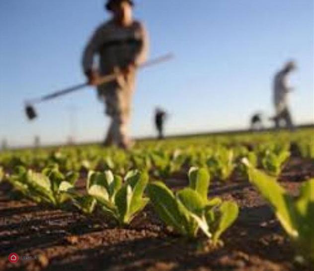 Terreno agricolo di 210000mq in spazzate sassatelli a imola