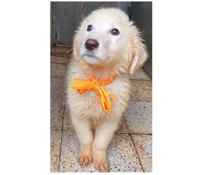 Bianca,in adozione dal canile! padova - adozione cani e gatti
