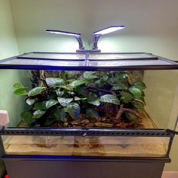 Acquario terrario exoterra 60x45x45 con piante vere