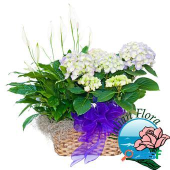 Cesto di piante per matrimonio - consegna in italia.