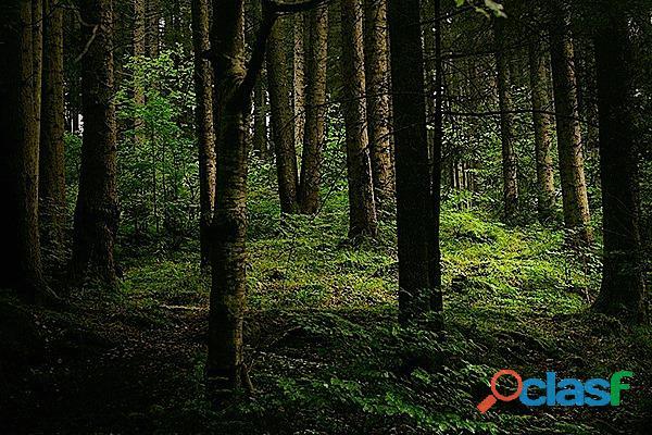 Terreni montani destinati a bosco ceduo