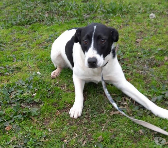 Lina: cucciolona taglia media in canile genova - adozione cani e gatti