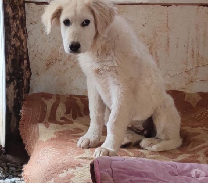 Cucciolo cerca casa padova - adozione cani e gatti