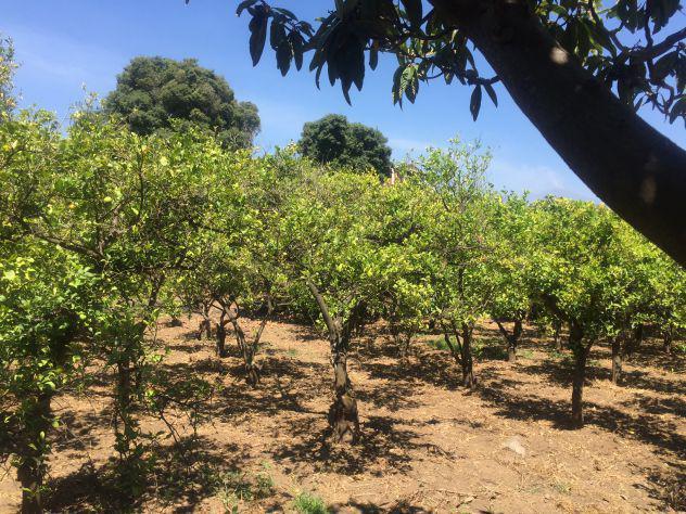 Terreno agricolo 3700 mq con deposito in vendita ad aci