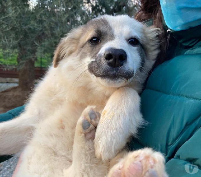 Cucciola taglia medio-piccola modena - adozione cani e gatti