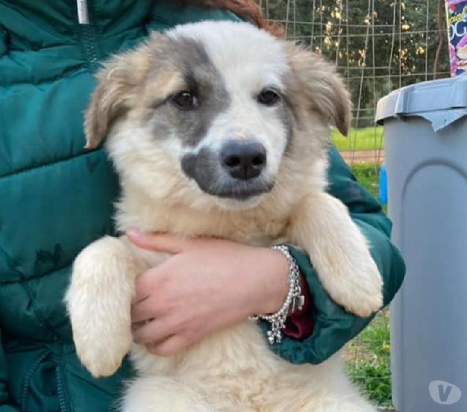 Paige cucciola taglia medio piccola padova - adozione cani e gatti