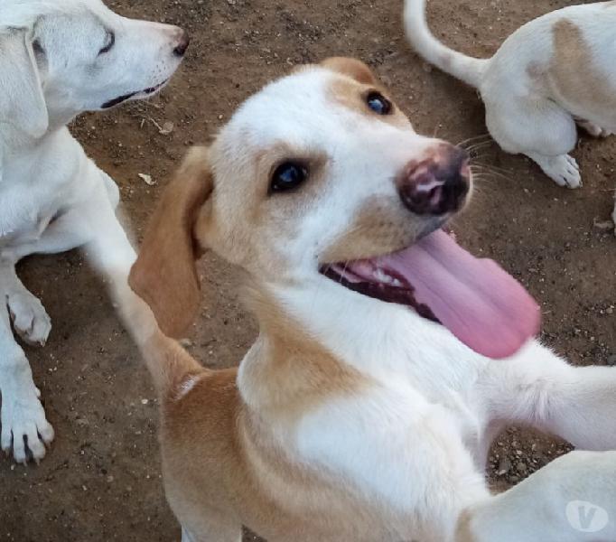 Una casa per terry cucciolo di 9 mesi taglia medio contenuta lodi - adozione cani e gatti