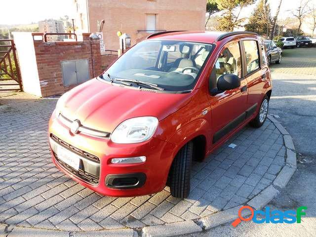Fiat panda benzina in vendita a siena (siena)