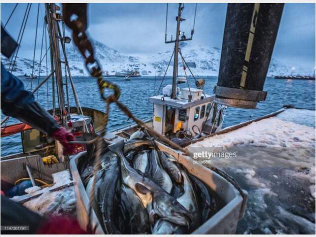 Barca a motore3b craft barca pesca fisher altura anno2020
