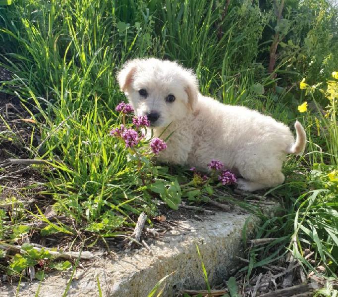 Luce: 2 mesi, taglia medio grande. cerca adozione livorno - adozione cani e gatti