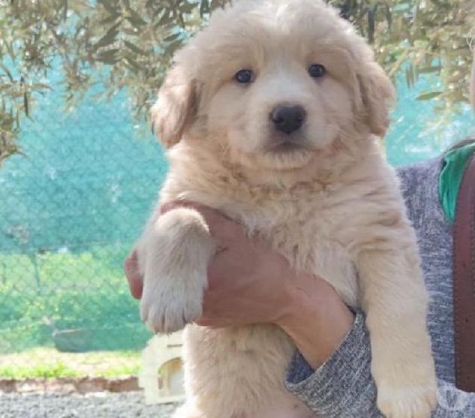 Margot dolce cucciola torino - adozione cani e gatti
