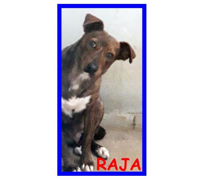 Raja 4anni timidona - adozione consapevole monza - adozione cani e gatti