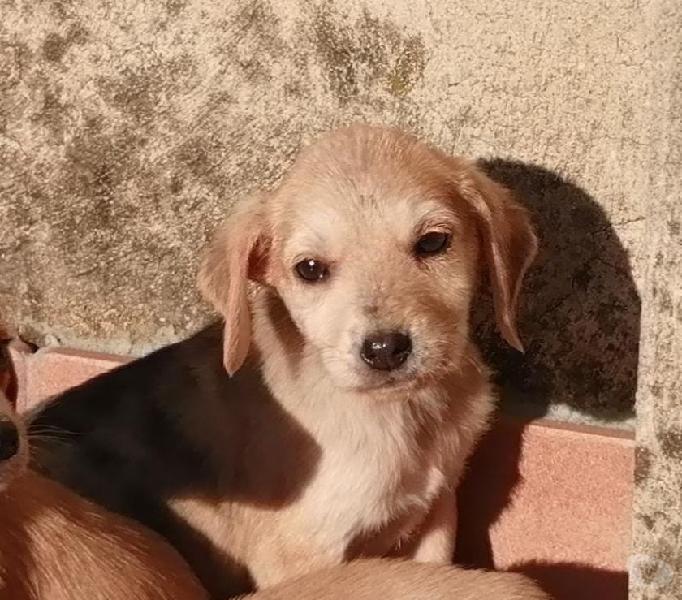 Lucia due mesi mezzo visibile a milano usmate velate - adozione cani e gatti