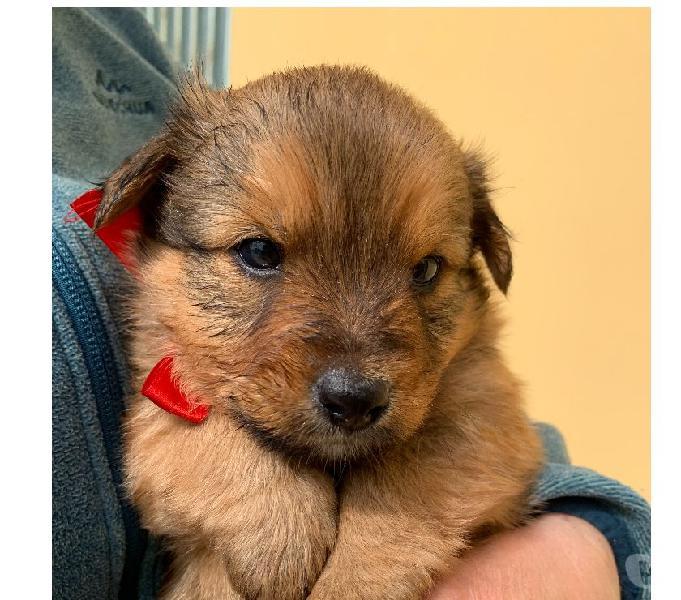 Adozione cucciolo taglia piccola bologna - adozione cani e gatti