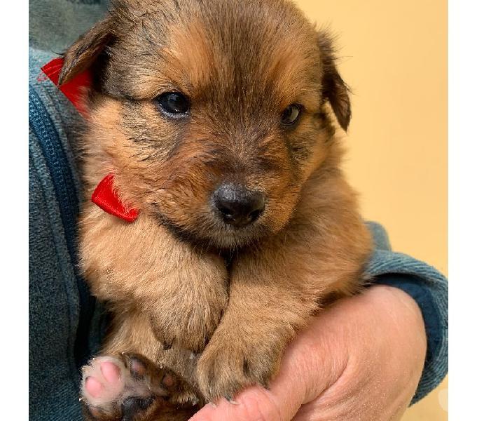 Adozione cucciolo taglia piccola roma - adozione cani e gatti