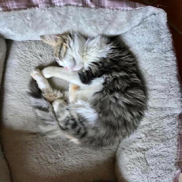 Bellissimo gattino di 5 mesi cerca casa