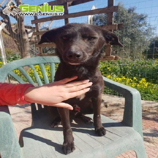 Tobia, cagnolino nero, 1 anno e mezzo, taglia piccola 10 kg
