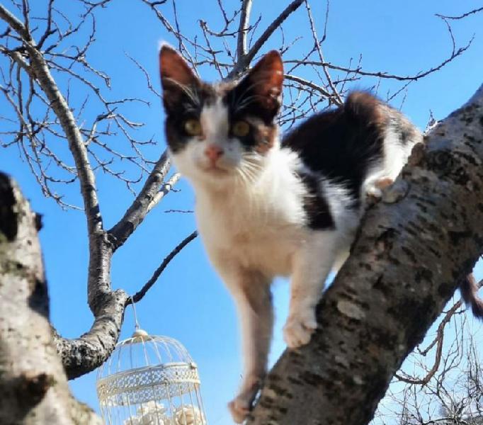 Milu': 4 mesi cerca adozione genova - adozione cani e gatti