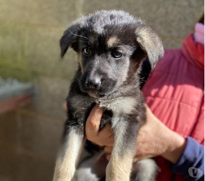 Tortino, futura taglia media, 2 mesi e mezzo, cerca casa! rimini - adozione cani e gatti