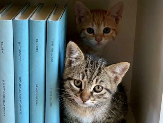 Dog-sitter cat-sitter / tata per animali domestici
