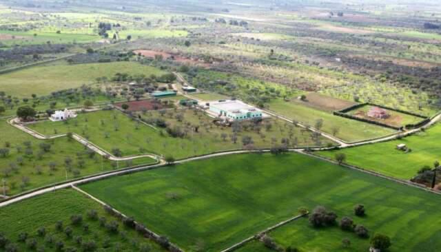 Azienda agricola biologica frantoio cantina immobili terreni