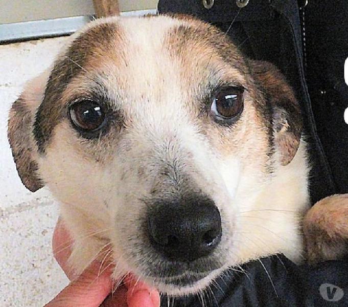 Cane gaia piccola giovane adozione dal canile buona e tenera latina - adozione cani e gatti