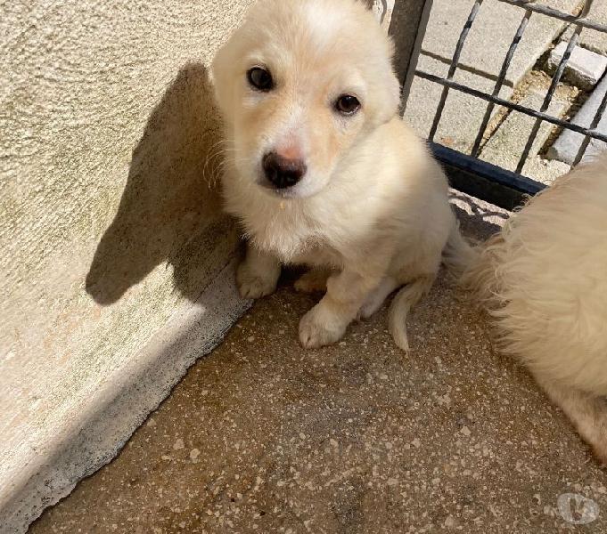 Cucciolo tg medio piccola in adozione perugia - adozione cani e gatti