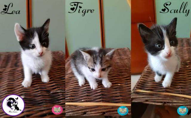 Lea, tigre, scully, micini in adozione!