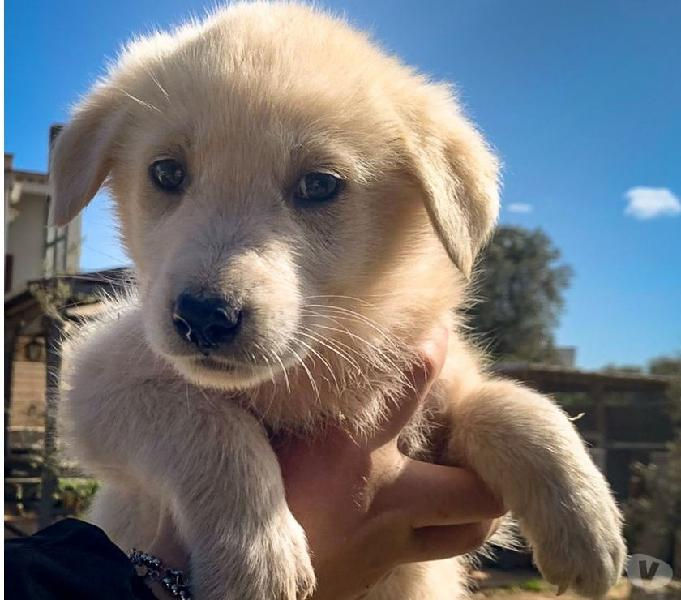Cucciolo cerca casa bologna - adozione cani e gatti