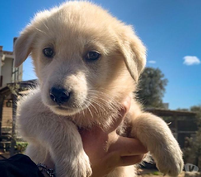 Cucciolo cerca casa forlì - adozione cani e gatti