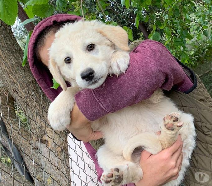 Adozione cucciolo taglia grande udine - adozione cani e gatti