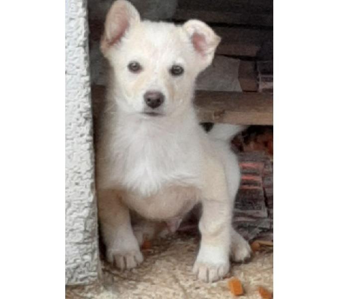 Cucciolo tg medio piccola in adozione verona - adozione cani e gatti