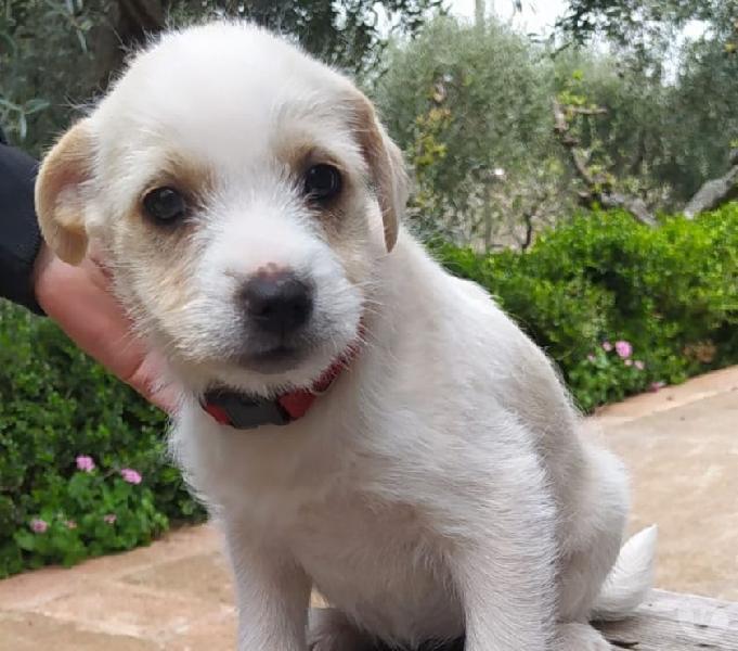 Shani, taglia medio piccola in adozione trieste - adozione cani e gatti