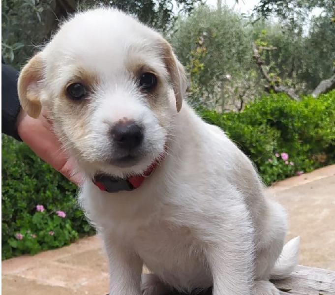 Shani, taglia medio piccola in adozione verona - adozione cani e gatti
