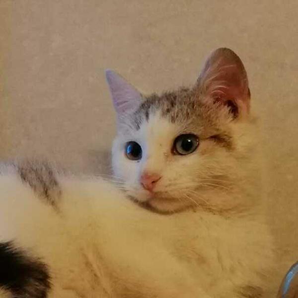 Gattina di 6 mesi cerca casa