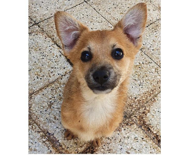 Lia,taglia medio piccola,in adozione dal canile... padova - adozione cani e gatti