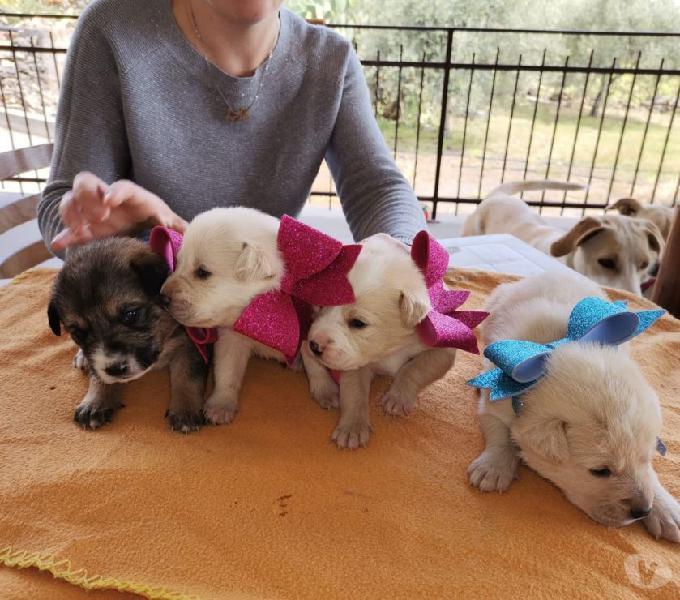 Cuccioli meticci labrador catania - adozione cani e gatti