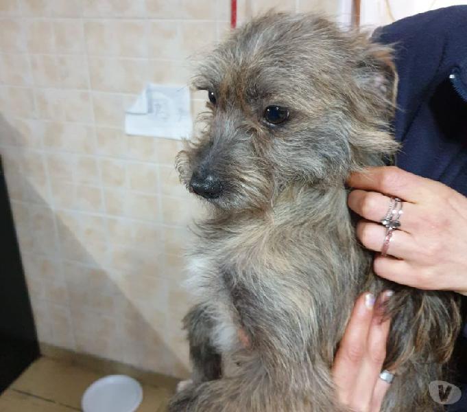 Damon: 1 anno, taglia piccola. cerca adozione urgente genova - adozione cani e gatti