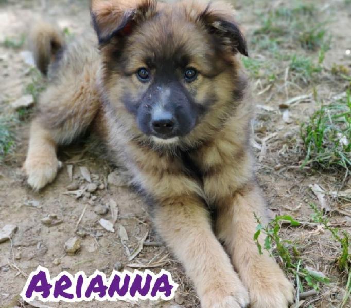 Arianna cucciola cerca ???? bologna - adozione cani e gatti